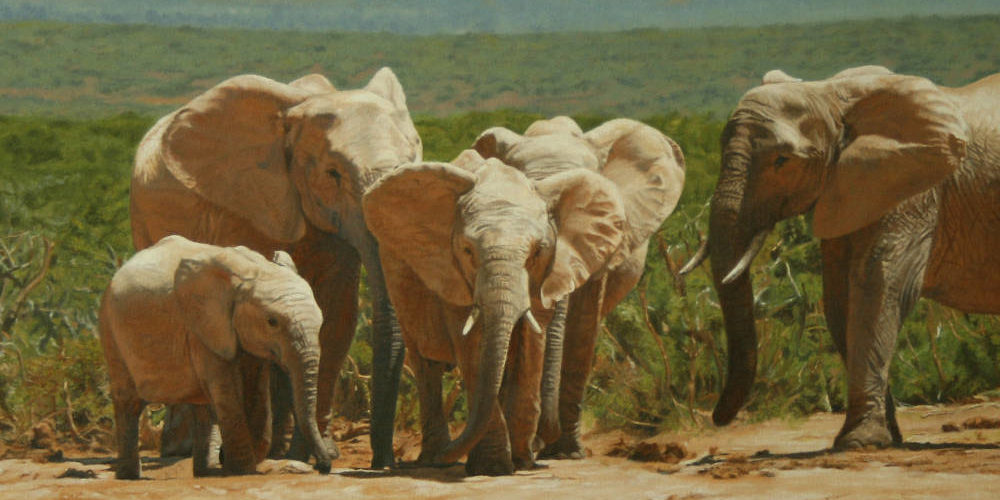 Oil on canvas painting close-up of Addo Elephants by artist Peter Strobos.